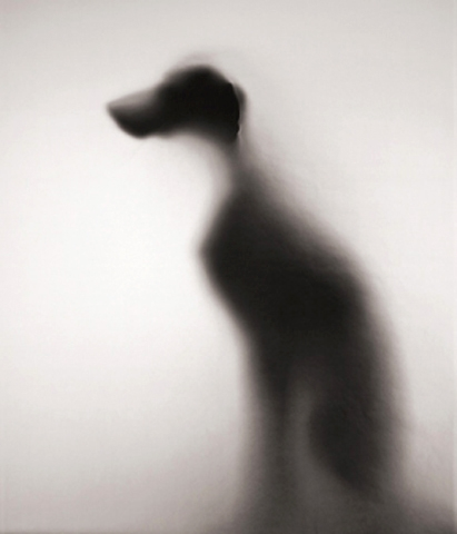artwork_images_177231_84787_william-wegman