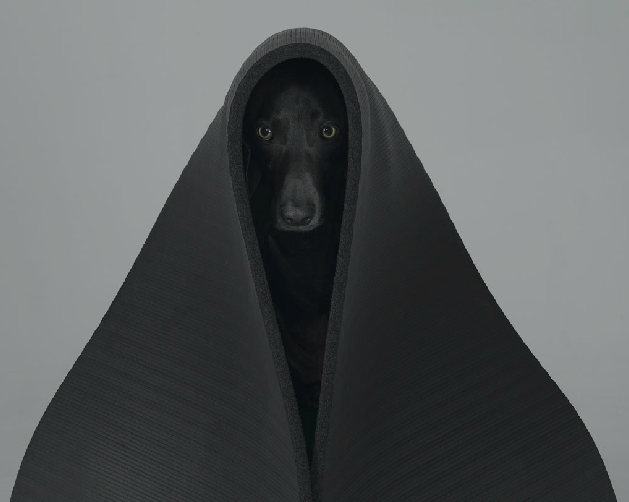 william-wegman-dog-portraits-4