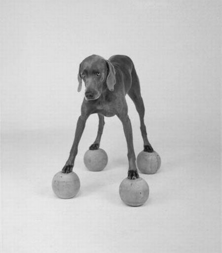 william-wegman15